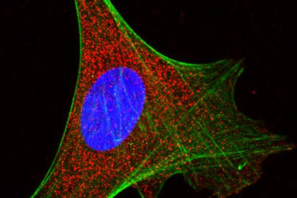 Developmental and Cell Biology