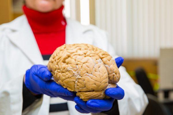 Neurobiology-and-Behavior